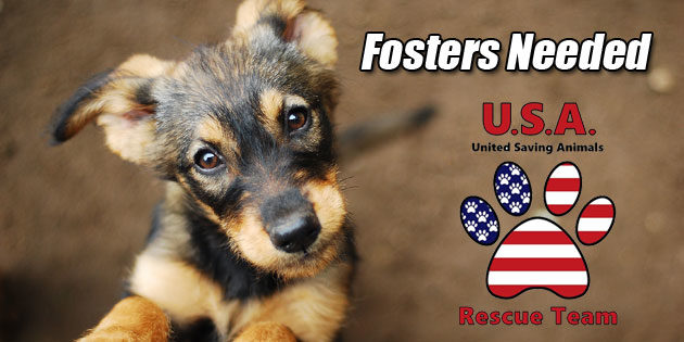 USA Rescue Team puts out urgent plea for temporary fosters